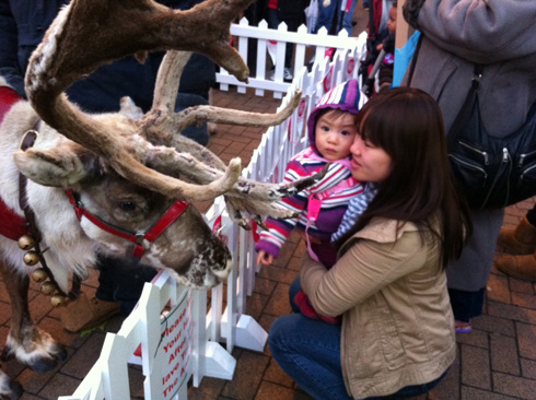 Reindeer in Croydon