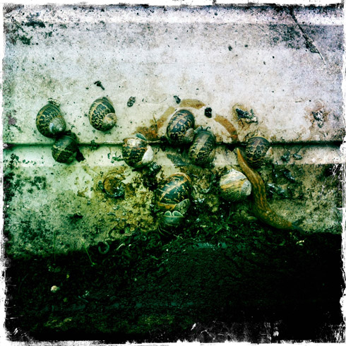 Snails