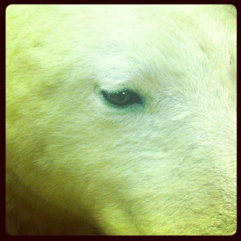 Tring Animal Eyes