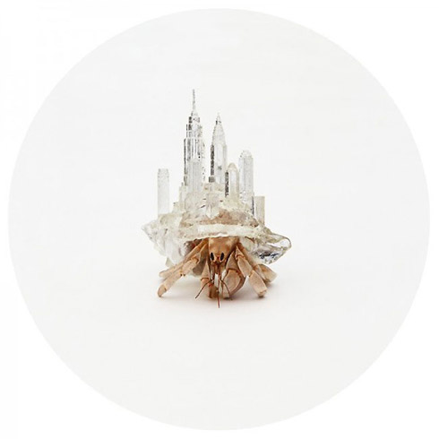 Hermit Crabs Carrying Cities
