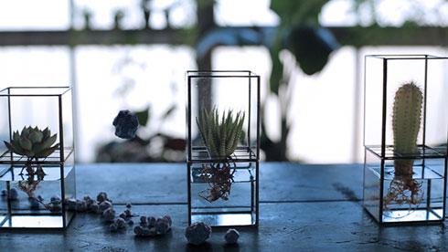 Hydroponic Terrariums