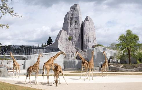 Bernard Tschumi's Paris zoo
