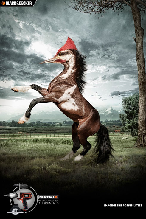 Woodpecker Horse