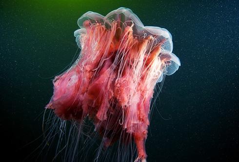 Underwater Experiments