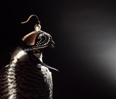 Falcon Hood 2
