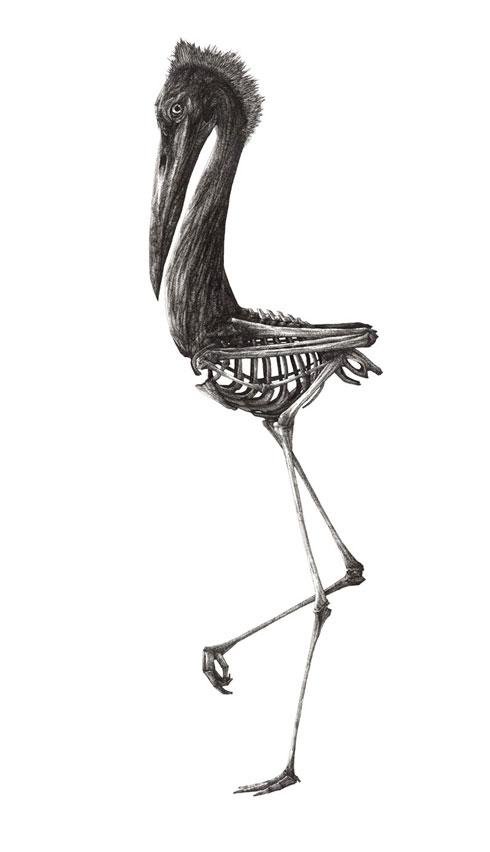 Theo Jan's Heron