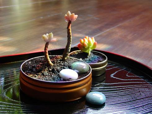 Altoids Tin Garden