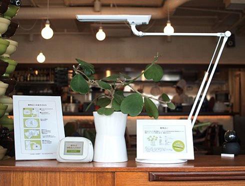 Blogging Plant